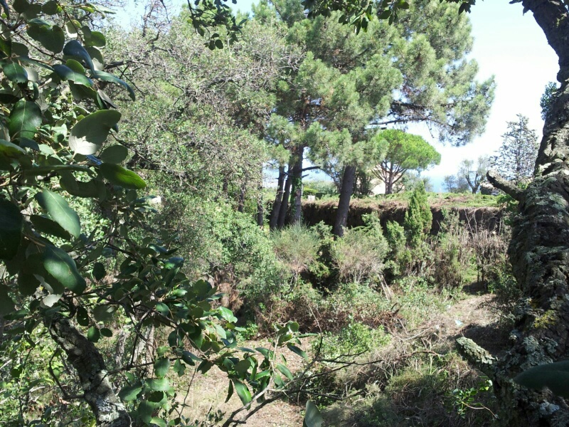 04101 - Flat plot with nice country side views close to Playa d´Aro, Costa Brava
